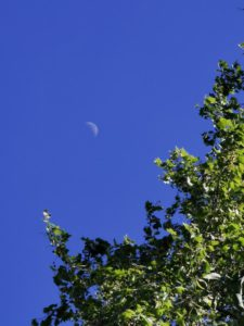 The moon, seen from the ground.